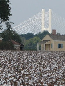 cotton field with bridge